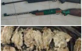 دستگیری متخلفین شکاروصید در شهرستان رودان